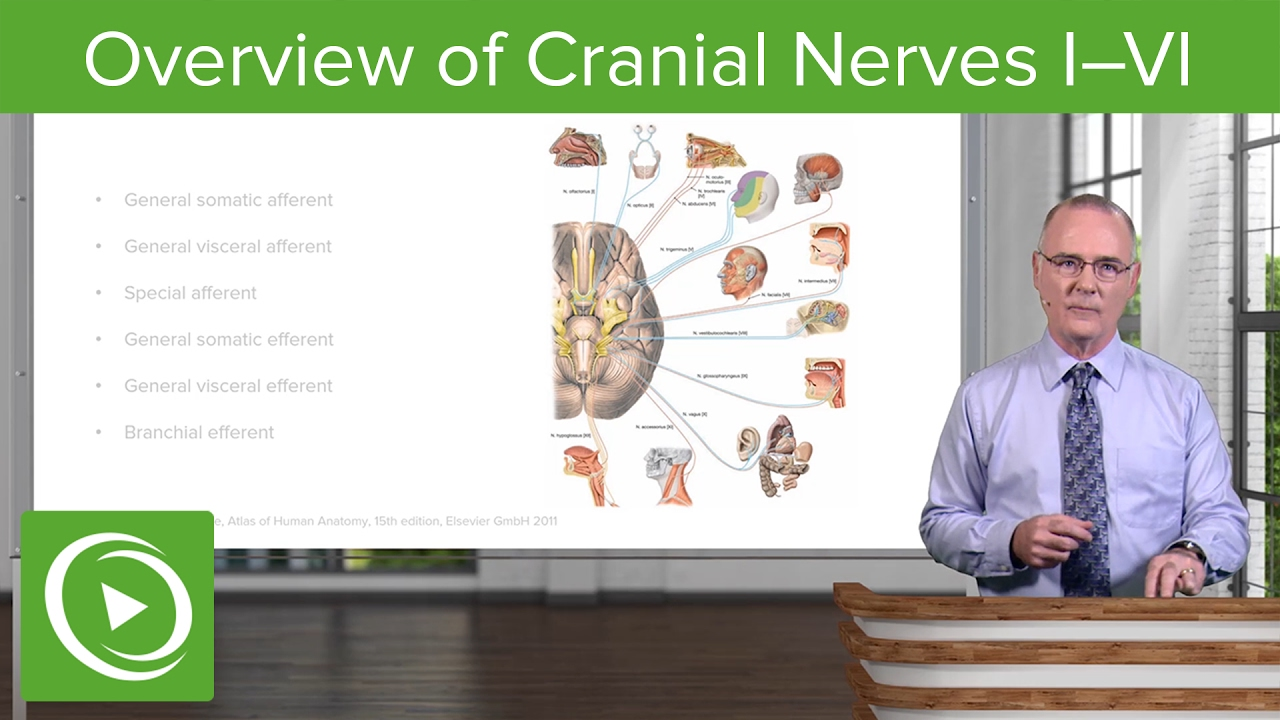 Cranial Nerves I–VI: Overview & Functional Components – Brain & Nervous System | Lecturio