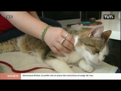 Garde D'animaux : Des Services De Visites à Domicile à Lyon