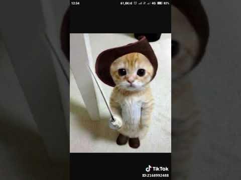 Download 78+  Gambar Kucing Komen Lucu Paling Baru Gratis