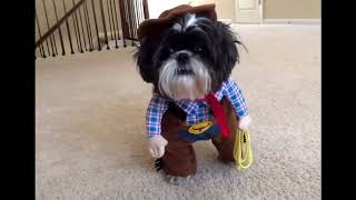 Dog Compilation   DOG IN COSTUME  Funny Video by PRIDE 6