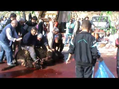 Kurban Kesimi KKB Kurban Bayramı Woman female audience