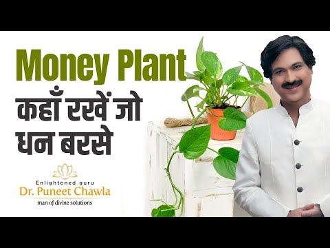 How to Plant, Grow and Care Money Plant ? Vastu Tips for Money Plant to Earn More Money