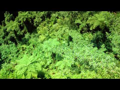 Tropical Rainforest (IMAX)