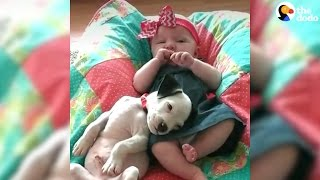 Pit Bull And Baby Grow Up Together | The Dodo