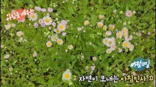자연이 보내는 아침인사 #24 봄망초