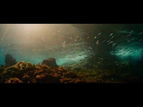 Evolution trailer