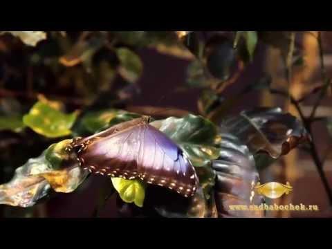 3 музея живых бабочек в Санкт-Петербурге