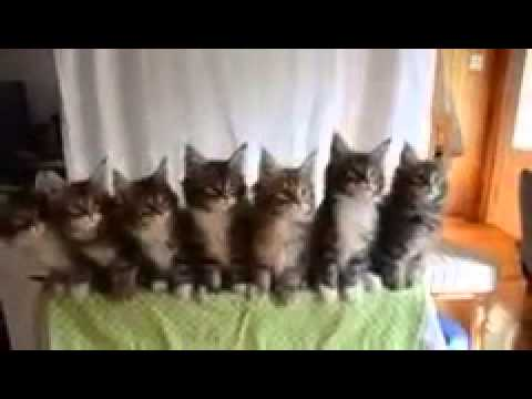 Котята :-) танцуют