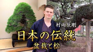 日本の伝統(盆栽と松)【東京動画スペシャル番組】