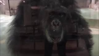 【猿がいっぱい】日本モンキーセンターの猿を全て撮影してみた