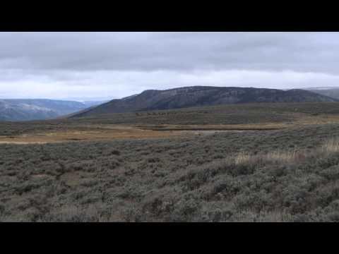 Elk herd running along the Agate Creek Trail in Yellowstone N.P.