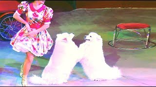 Circus. The new show dogs. Цирк. Смотреть Шоу собак.