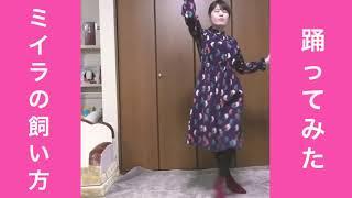 ミイラの飼い方 踊ってみた 『ロゼッタ・ストーン』イケてるハーツ ダン...