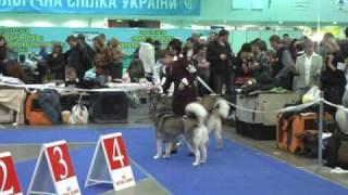 КИЕВСКАЯ РУСЬ - 2010. Порода маламут. Суки и ЛПП.