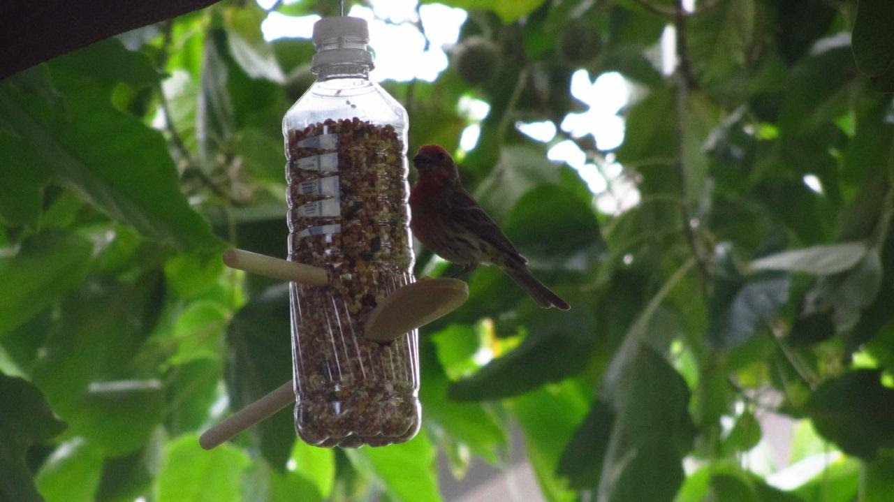 how to make a homemade bird feeder from water bottles child