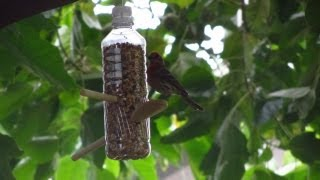 How To Make A Homemade Bird Feeder From Water Bottles - Child Crafting With Bain