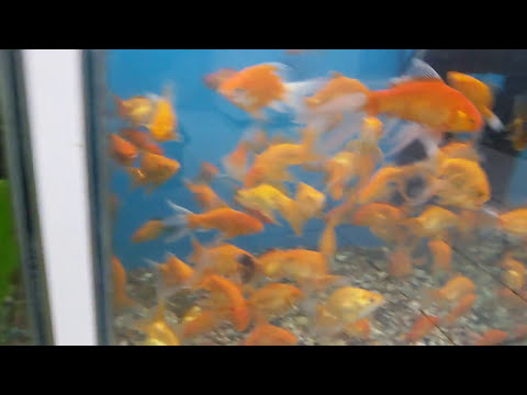qatar tourism souq waqif  fish aquariums