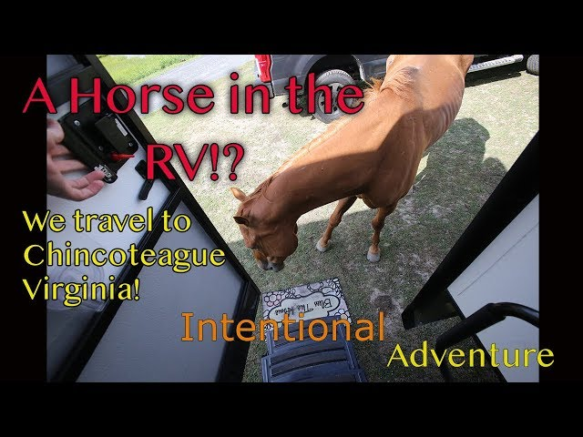 A horse in the RV?! | Chincoteage VA | Fulltime Family Travel | Intentional Adventure Ep. 6
