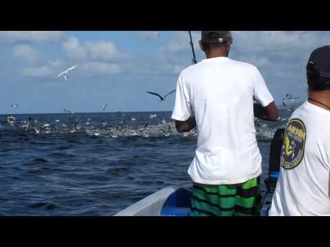 Fishing Some Jack In Pie De Gigante, Nicaragua