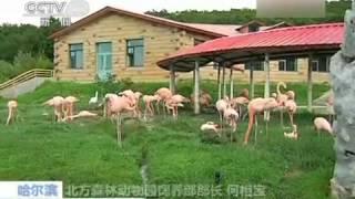 動物ニュース 北京動物園の動物たちが一斉に病に