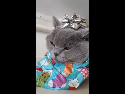 how to wrap your cat for christmas cuteness - How To Wrap A Cat For Christmas