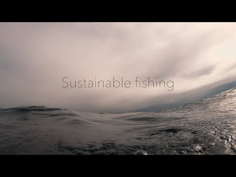 What Is Sustainable Fish?
