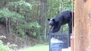Smoky Mountain Bear Experience 2015 pt. 1