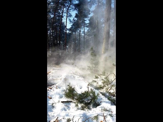 Jak prawie rozwaliłem kamerę sportową w trakcie wycinki drzewa ;)