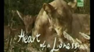 Необычное явление природы(В природе встречаются необычные явления, например, дружба между львицей и антилопой, хищницей и добычей...., 2009-12-21T21:38:36.000Z)