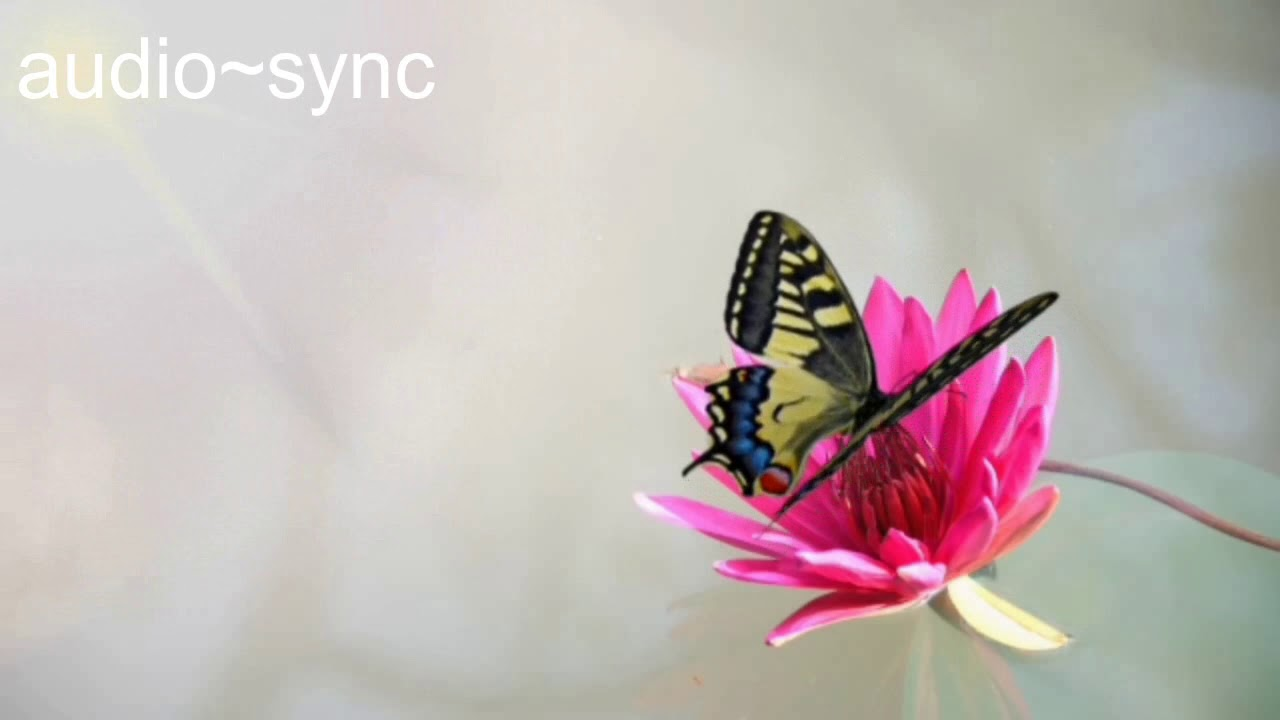 Butterfly Sipping Nectar | Soft Water Sounds | Gentle and Calming