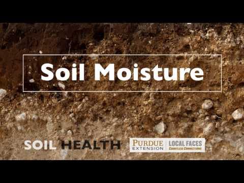 Soil Basics: Soil Moisture