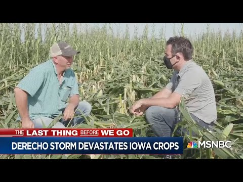 Iowa Corn Disaster