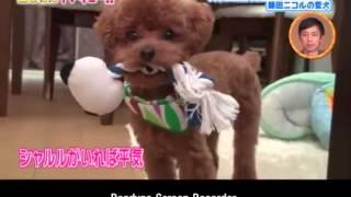 藤田ニコル にこるん の 愛犬シャルルの にこるん 愛.
