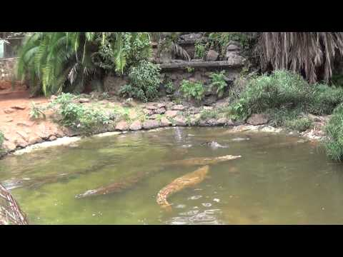 Mamba Village ( Parte 4 ) - Nairobi - Kenya - Diego Chefaly e Paulo Jurno