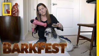 Morie the Mellow Pooch | BarkFest