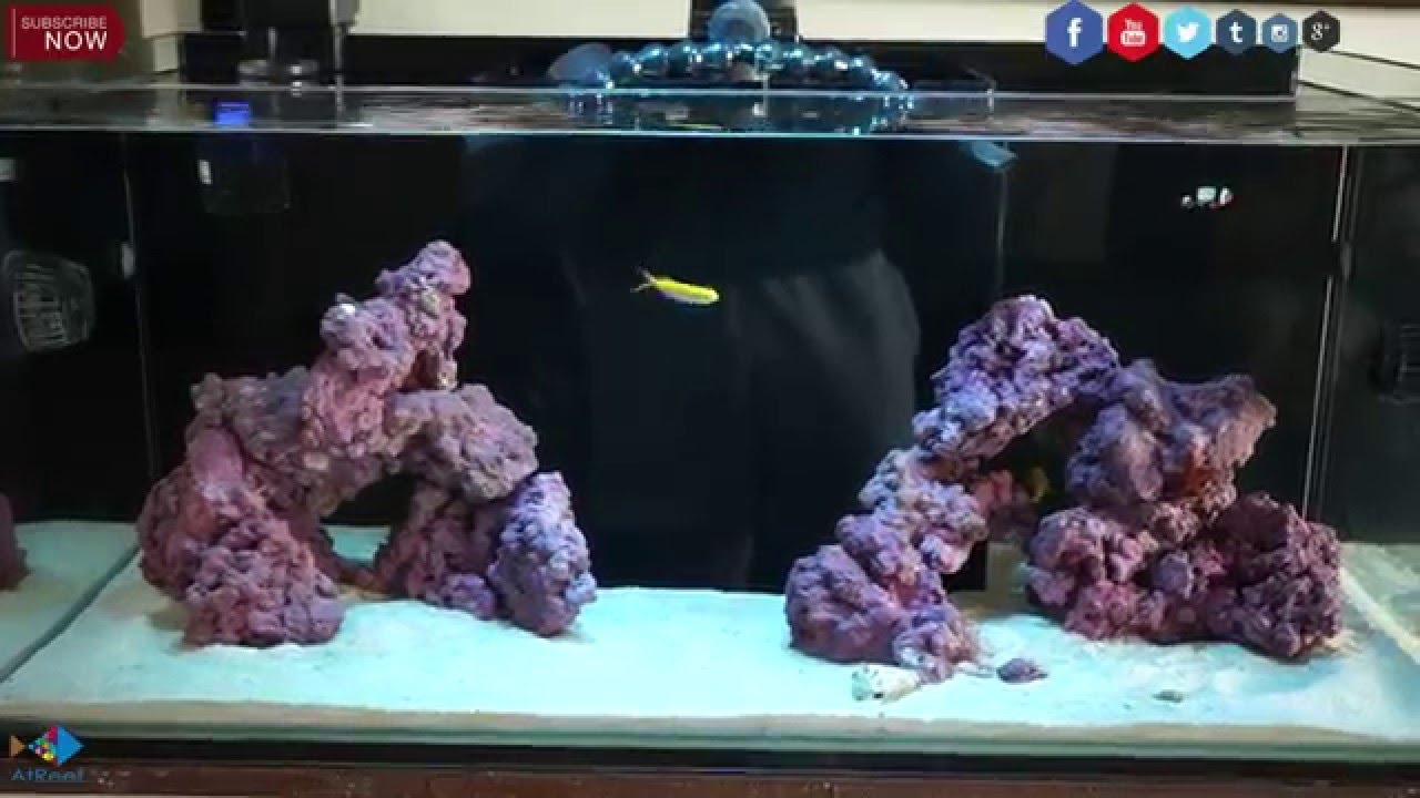 How to start a reef aquarium the right way youtube for How to start a saltwater fish tank