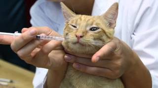 How to Give Antibiotics to Nursing Cats : Cat Care & Behavior