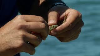 Мировая рыбалка. Сезон 4. Ловля кефали на Каспийском море