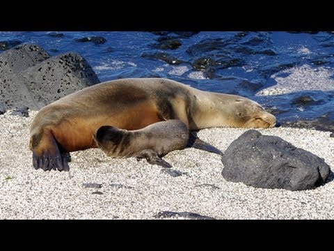 Puerto Egas, Santiago Island, Celebrity Xpedition