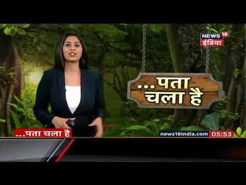 जंगल में शेर को मिला 'सवा शेर' | पता चला है | News18 India thumbnail