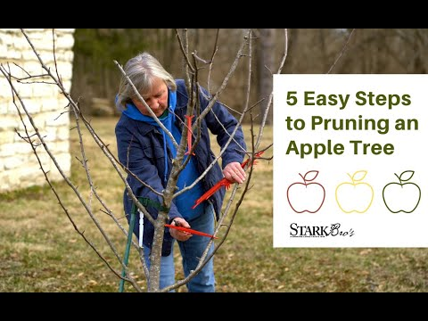 Pruning An Apple Tree in 5 Easy Steps