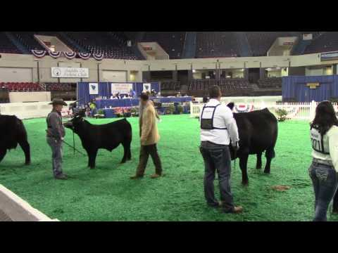 Beef Show, Freedom Hall East - November 16, 2016