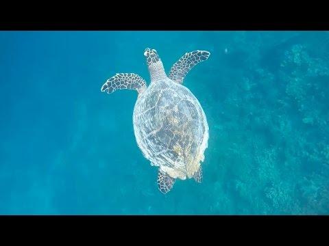 Maldives - Gili Lankanfushi - Psyko Punkz VLOG #60