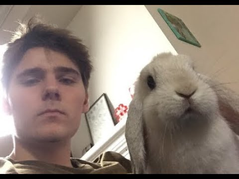 Alex Ernst and his bunny Bailey compilation