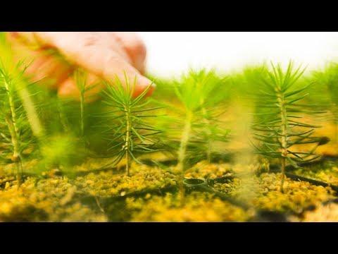 Kasvatamme tulevaisuutta - UPM Taimet