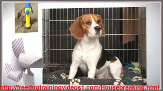 Solution To Your Crate Training Adult Dog Problems