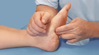 Роль и значение отдельных мышц стопы и голени при коррекции сколиоза. Анатомия и биомеханика