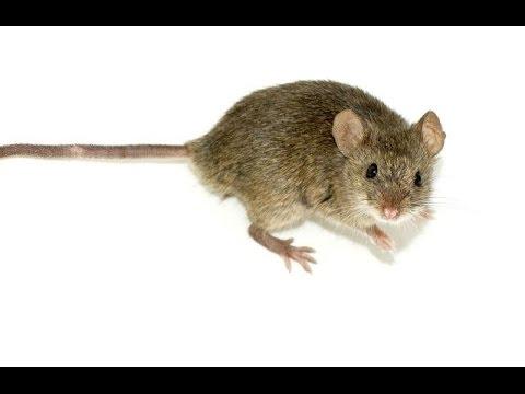 Почему не работает мышь на ноутбуке или мышка?