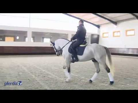 Trailer - Pedro Torres: Dressage & Working Equitation DVD, The Master of Portuguese Equitation