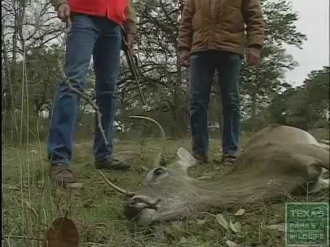 how to field dress a deer youtubehow to field dress a deer